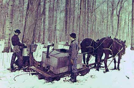 Maple sugaring, Chardon, 1976