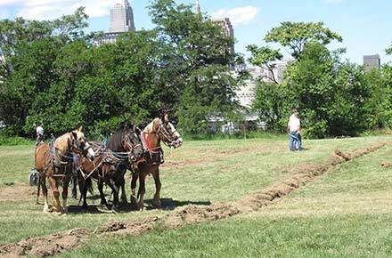 Plow horses at the groundbreaking for the Ohio City Farm, 2010